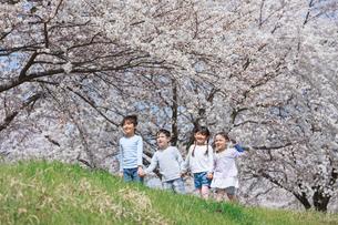 桜並木を手をつないで歩く子供たちの写真素材 [FYI04018822]