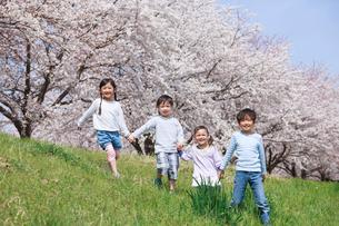 桜並木を手をつないで歩く子供たちの写真素材 [FYI04018823]
