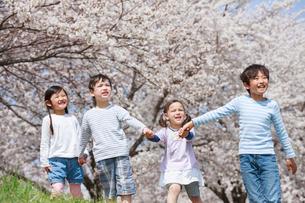 桜並木を手をつないで歩く子供たちの写真素材 [FYI04018824]