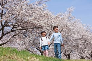 桜並木を手をつないで歩く兄妹の写真素材 [FYI04018825]