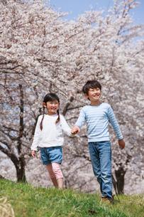 桜並木を手をつないで歩く兄妹の写真素材 [FYI04018826]