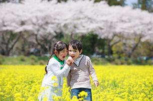 菜の花畑で遊ぶ子供たちの写真素材 [FYI04018827]