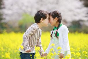 菜の花畑で顔を合わせる子供たちの写真素材 [FYI04018828]