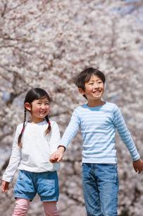 桜並木を手をつないで歩く兄妹の写真素材 [FYI04018829]