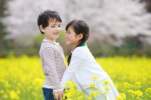 菜の花畑で手をつなぐ子供たちの写真素材 [FYI04018830]