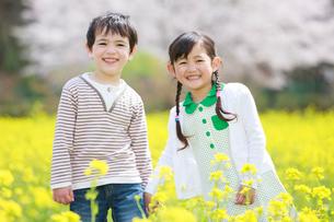 菜の花畑で手をつなぐ子供たちの写真素材 [FYI04018832]