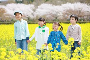 菜の花畑を歩く子供たちの写真素材 [FYI04018835]
