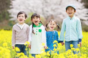菜の花畑で笑う子供たちの写真素材 [FYI04018836]