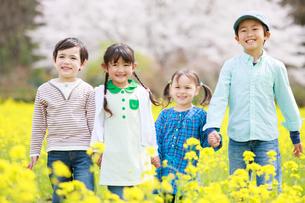 菜の花畑で笑う子供たちの写真素材 [FYI04018838]
