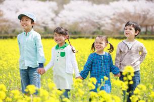 菜の花畑を歩く子供たちの写真素材 [FYI04018839]
