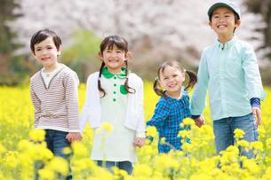 菜の花畑で笑う子供たちの写真素材 [FYI04018840]