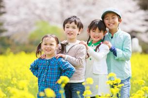 菜の花畑で笑う子供たちの写真素材 [FYI04018841]
