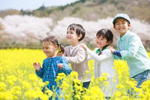 菜の花畑で遊ぶ子供たちの写真素材 [FYI04018843]