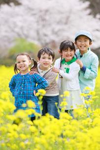 菜の花畑で笑う子供たちの写真素材 [FYI04018844]