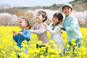 菜の花畑で遊ぶ子供たちの写真素材 [FYI04018846]