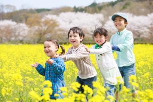 菜の花畑で遊ぶ子供たちの写真素材 [FYI04018847]