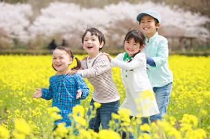 菜の花畑で遊ぶ子供たちの写真素材 [FYI04018848]