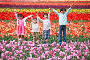 チューリップ畑で手を上げる子供たちの写真素材 [FYI04018849]