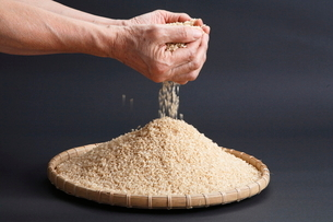 手のひらからこぼれる米の写真素材 [FYI04018865]