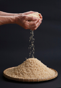 手のひらからこぼれる米の写真素材 [FYI04018866]