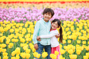 チューリップ畑で笑う兄妹の写真素材 [FYI04018867]