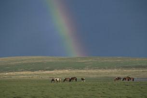 草原の虹の写真素材 [FYI04019007]