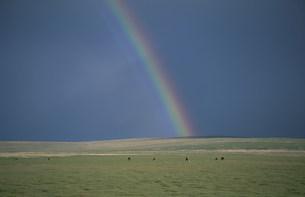 草原の虹の写真素材 [FYI04019008]