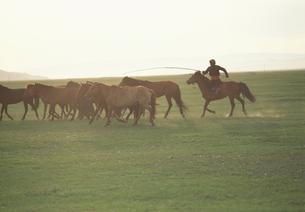 朝の馬集めの写真素材 [FYI04019024]