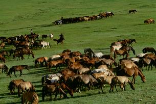 草原と馬の写真素材 [FYI04019026]