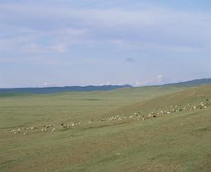 草原と羊 モンゴルの写真素材 [FYI04019029]