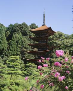 改修後の瑠璃光寺の写真素材 [FYI04019633]