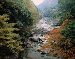 秋のかずら橋の写真素材 [FYI04019712]