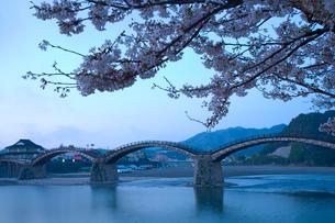 桜と錦帯橋の写真素材 [FYI04019929]