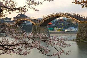 桜と錦帯橋の写真素材 [FYI04019931]