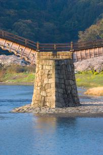 桜と錦帯橋の写真素材 [FYI04019934]