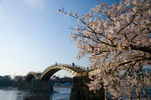 桜と錦帯橋の写真素材 [FYI04019935]