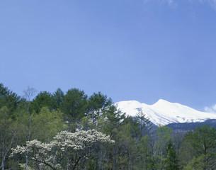 一ノ瀬公園より乗鞍岳の写真素材 [FYI04020744]