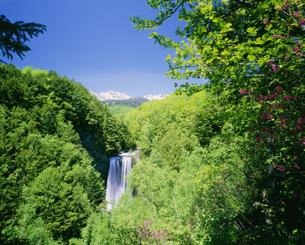 新緑の善五郎の滝と乗鞍岳 乗鞍高原の写真素材 [FYI04020919]