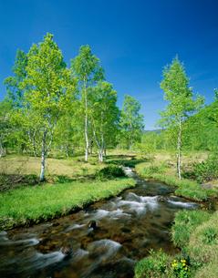 新緑の乗鞍高原 一の瀬園地の写真素材 [FYI04020924]