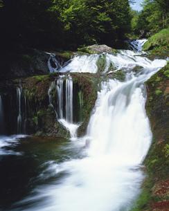 明治温泉  おしどり隠しの滝の写真素材 [FYI04020925]