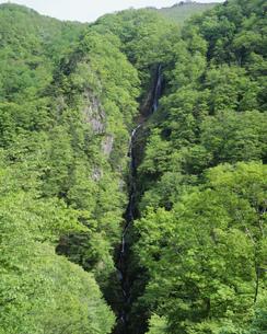 新緑の八滝の写真素材 [FYI04021011]