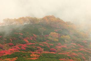 乗鞍岳の紅葉の写真素材 [FYI04021086]