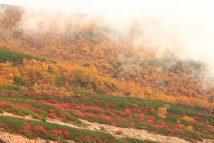 乗鞍岳の紅葉の写真素材 [FYI04021088]