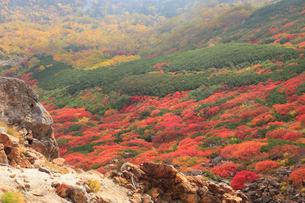 乗鞍岳の紅葉の写真素材 [FYI04021089]