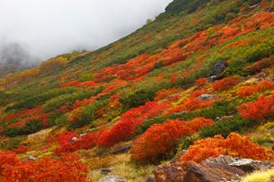 乗鞍岳の紅葉の写真素材 [FYI04021090]