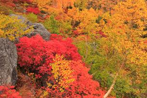 乗鞍岳の紅葉の写真素材 [FYI04021091]