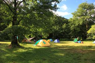 夏の徳沢キャンプ場の写真素材 [FYI04021148]