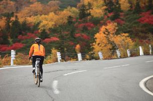 紅葉の乗鞍エコーラインを登る女性サイクリストの写真素材 [FYI04021175]