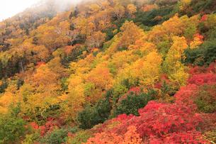 乗鞍岳の紅葉の写真素材 [FYI04021182]