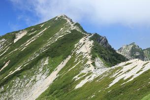 夏の唐松岳の写真素材 [FYI04021206]